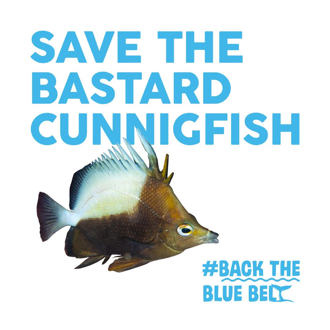 Bastard_Cunning FishINSTAGRAM